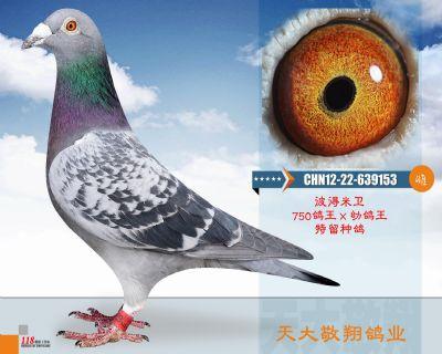 CHN12-22-639153