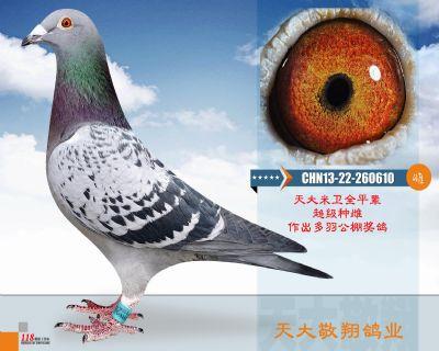 CHN13-22-260610