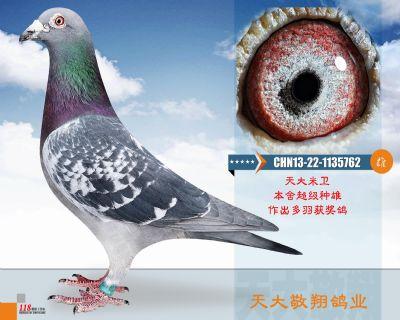 CHN13-22-1135762