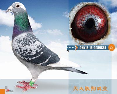 CHN16-16-0059861