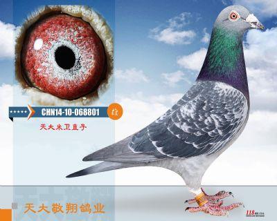 CHN14-10-068801