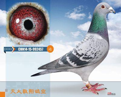 CHN14-15-992457