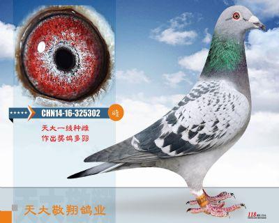 CHN14-16-325302