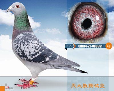 CHN14-22-086951