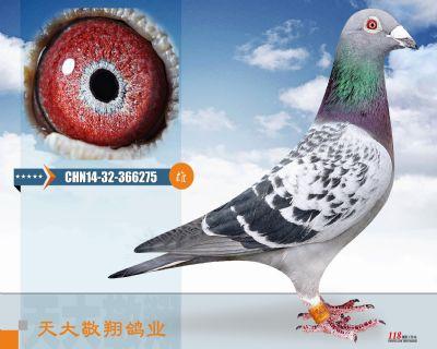 CHN14-32-366275