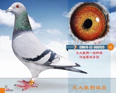 CHN14-32-366935