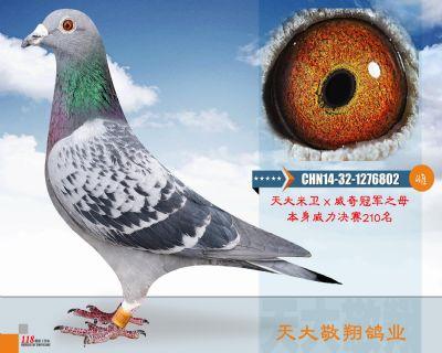 CHN14-32-1276802