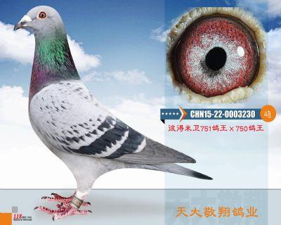 CHN15-22-0003230