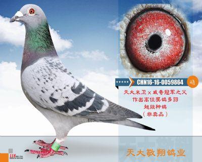 CHN16-16-0059864