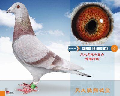 CHN16-16-0081072