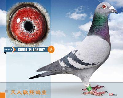 CHN16-16-0081077