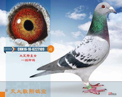 CHN16-16-6227109