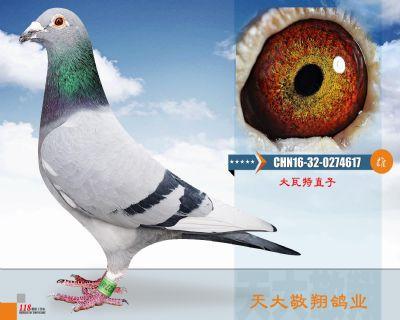 CHN16-32-0274617