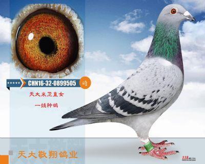 CHN16-32-0899505