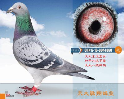 CHN17-16-0044368