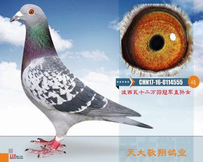 CHN17-16-0114555