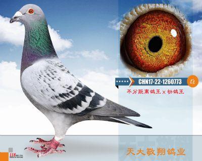 CHN17-22-1260773
