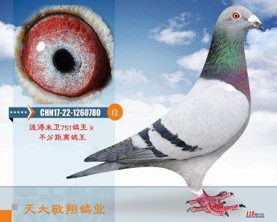 CHN17-22-1260780