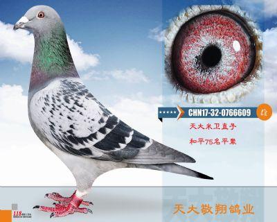 CHN17-32-0766609