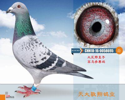 CHN18-16-0058695