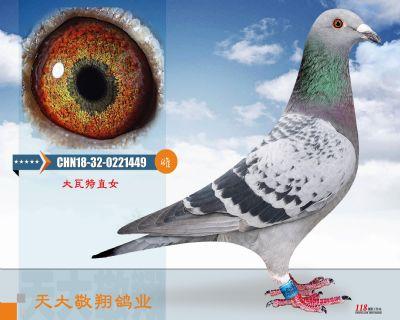 CHN18-32-0221449