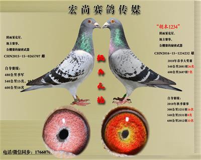 宏尚赛鸽传媒