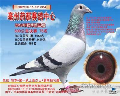 亳州鸽中心2018秋季第三届决赛75