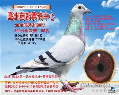 亳州赛鸽中心2018秋季第三届决赛158
