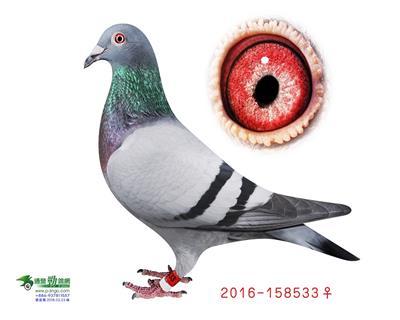 T2016-158533