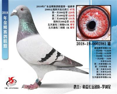 金鳞赛鸽联盟第一届秋季四关鸽王97名