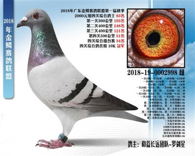 金鳞赛鸽联盟第一届秋季四关鸽王83名