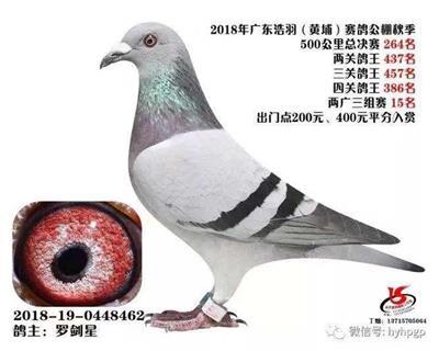 广东浩羽(黄埔)赛鸽公棚秋季决赛264名