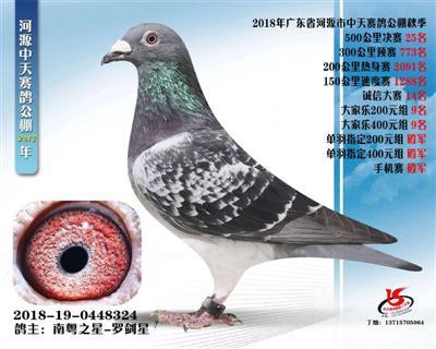 广东河源市中天赛鸽公棚决赛25名