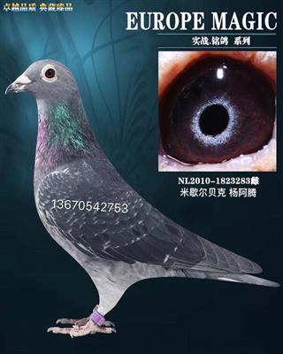 杨阿腾多利-238