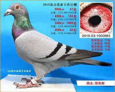 北京卡普鸽王11位