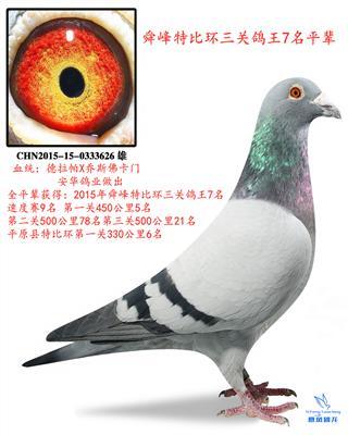 2015年舜峰特比环三关鸽王7名平辈