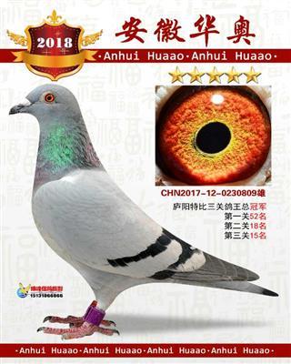 2017年庐阳鸽会三关鸽王冠军