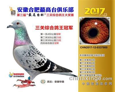 2017年最高台三关鸽王冠军