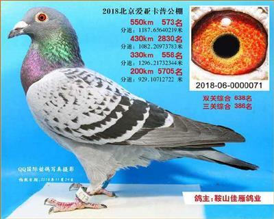 2018年北京爱亚卡普公棚573名