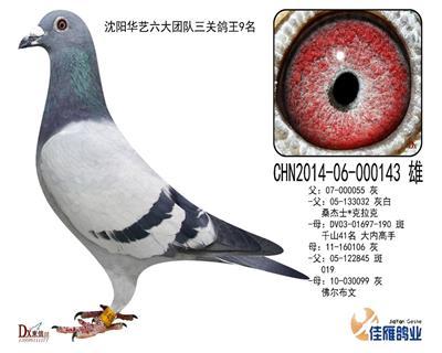 辽宁华艺六大团队三关鸽王9名
