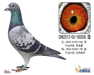 子代做出多羽成绩鸽180008