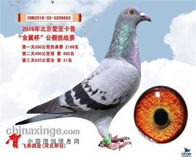 涿州卡普决赛31名