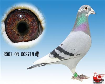 【桑杰士功�追N雌】718