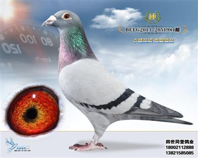 戈马力原舍(3号雌)