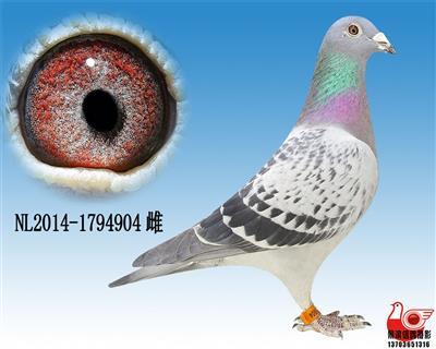 【盖比】超级鸟