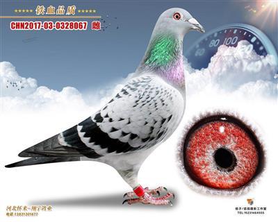 杨欧瓦克067