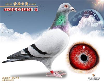 杨欧瓦克061