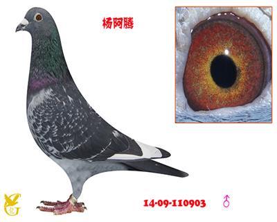 杨阿腾・110903