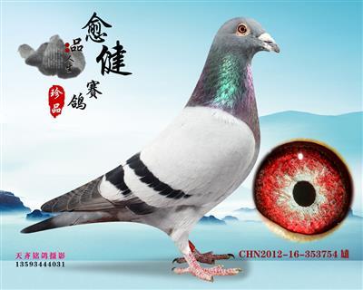 爱翔种鸽拆迁转让