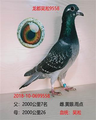 龙都吴淞9558